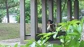 公園愛侶:DSC_0204.jpg