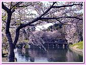 日本岡山富山賞櫻之旅:環繞彥根城的護城河#2