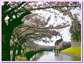 日本岡山富山賞櫻之旅:環繞彥根城的護城河#1