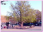 日本岡山富山賞櫻之旅:大阪城屹立不搖的百年老樹