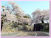 日本岡山富山賞櫻之旅:前往滋賀彥根城沿途的櫻花