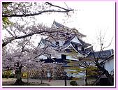 日本岡山富山賞櫻之旅:彥根城天守閣