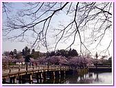 日本岡山富山賞櫻之旅:橫跨護城河的木橋#2