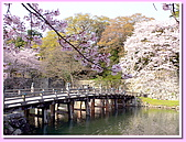 日本岡山富山賞櫻之旅:橫跨護城河的木橋#1