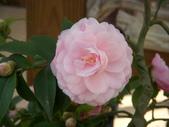 2009賞花:1048997423.jpg