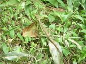 面天樹蛙:1038563859.jpg