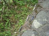 2008福山植物園:1797889850.jpg