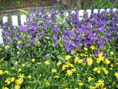 2009賞花:1048997432.jpg