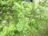 2008福山植物園:1797889834.jpg