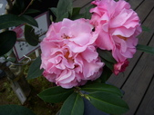 2009賞花:1048997425.jpg