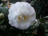 2009賞花:1048997427.jpg