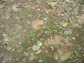 2008福山植物園:1797889844.jpg