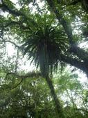 2008福山植物園:1797889846.jpg