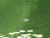 2008福山植物園:1797889839.jpg