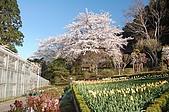 日本東北溫泉賞櫻 3:023岩手花卷溫泉玫瑰園.jpg