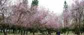 台南市春之花:18羊蹄甲-台南公園.jpg