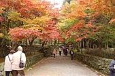 日本關西賞楓之旅DAY 5:014滋賀縣西明寺.jpg