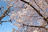 日本東北溫泉賞櫻 3:001岩手花卷溫泉.jpg