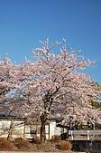 日本東北溫泉賞櫻 3:011岩手花卷溫泉.jpg