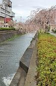 日本東北溫泉賞櫻 2:007山形天童倉津川.jpg