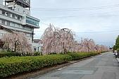 日本東北溫泉賞櫻 2:011山形天童倉津川.jpg