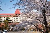 日本東北溫泉賞櫻 3:017岩手花卷溫泉.jpg