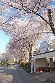 日本東北溫泉賞櫻 3:021岩手花卷溫泉.jpg