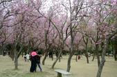 台南市春之花:05羊蹄甲-台南公園.jpg