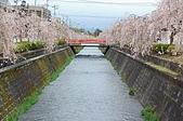 日本東北溫泉賞櫻 2:020山形天童倉津川.jpg