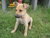 狗狗認養區:DSC00099.JPG
