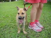狗狗認養區:DSC00105.JPG
