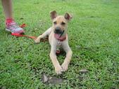 狗狗認養區:DSC00111.JPG