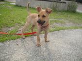 狗狗認養區:DSC00112.JPG