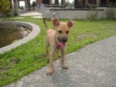 狗狗認養區:DSC00113.JPG