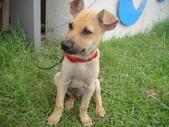 狗狗認養區:DSC00095.JPG