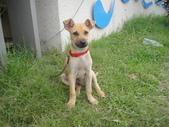 狗狗認養區:DSC00097.JPG