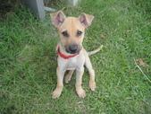 狗狗認養區:DSC00098.JPG