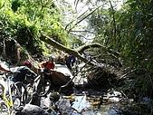20051029沙溪大社環線:過倒樹