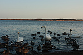 07.11.13.北海道.天鵝湖:換個低一點的角度再拍一張