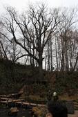 07.11.14.北海道.羊蹄湧水公園:旁邊長的很高但是都沒葉子的大樹