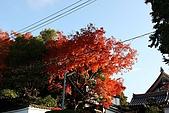 08.11.26.東福寺:隨拍