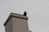 07.11.15.北海道.海洋公園:被我打到一隻烏鴉