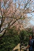 2010.03.12.淡水天元宮.萬華:天元宮
