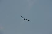 07.11.14.北海道.小樽運河:發現老鷹飛過,拿起200機槍開始打..XD