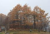 07.11.15.北海道.昭和新山:旁邊的樹林