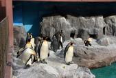 07.11.15.北海道.海洋公園:大家都先跑去看企鵝