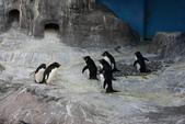 07.11.15.北海道.海洋公園:另一邊的企鵝