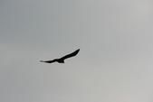 07.11.14.北海道.小樽運河:又打到一隻老鷹