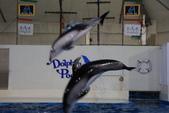 07.11.15.北海道.海洋公園:海豚秀