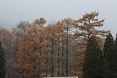 07.11.15.北海道.昭和新山:周邊的樹林景色